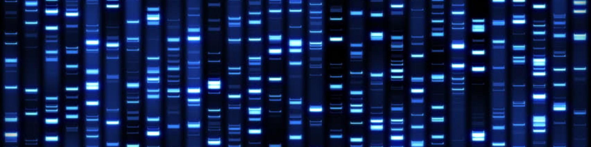 Échelles d'ADN RapidRun™